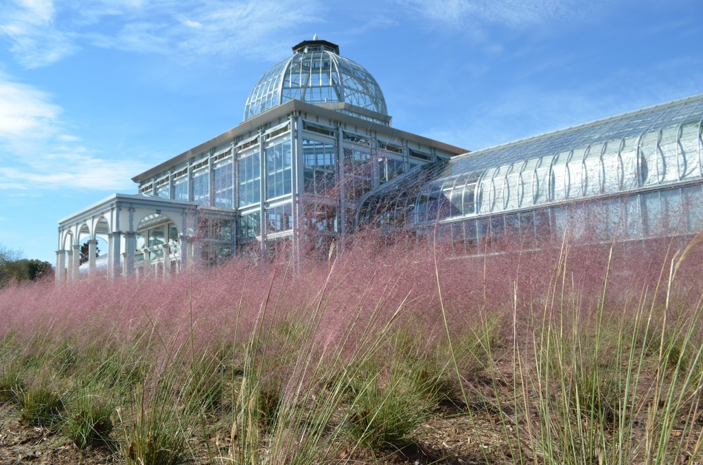 The Conservatory with Pink Muhly grass (Muhlenbergia capillaris).