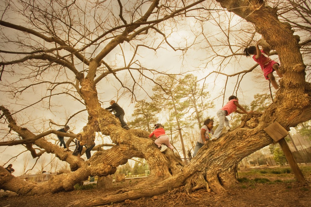 Kids climbing on the Mulberry Tree at Ginter Image by Robert Llewellyn