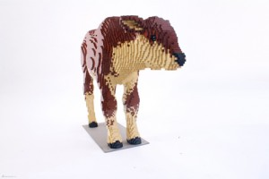 Calf from Nature Connects exhibit