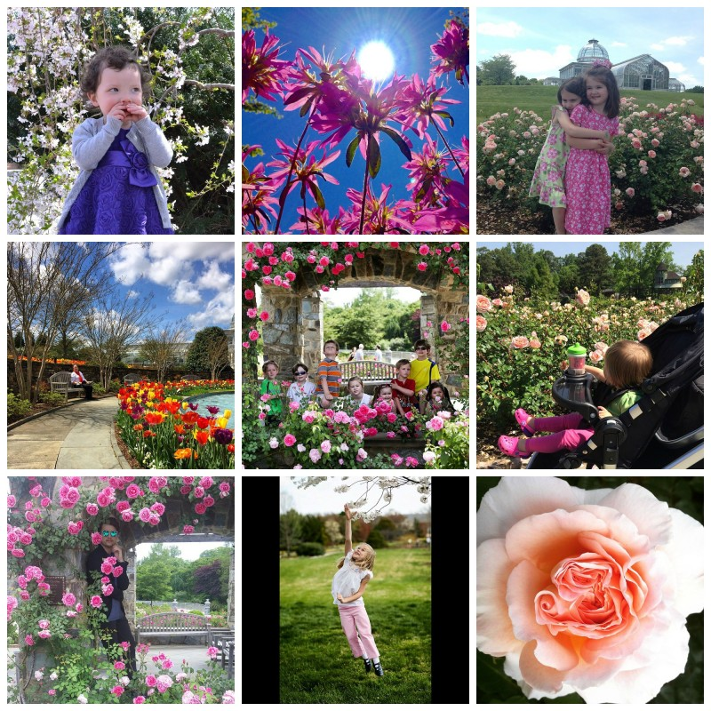 Collage of #MillionBlooms Instagram Contest Finalists