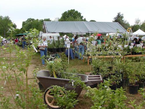 Lewis Ginter Plant Sale Vendor and vendor information.