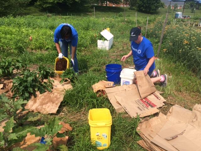 Genworth volunteers mulching rows with brown paper grocery bags that were donated by LGBG volunteers.