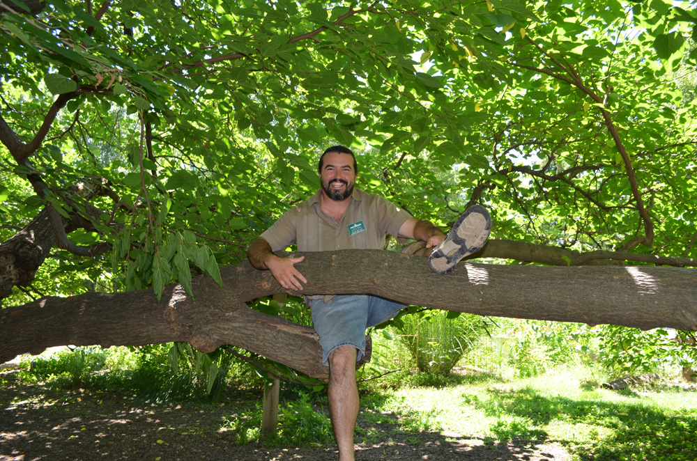 Kevin Ratliff, in mulberry tree