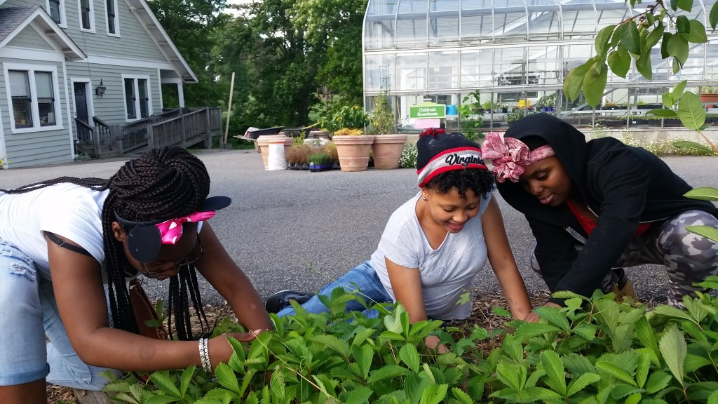 Students from Henderson Middles School's NextUp program collect strawberries in the Children's Garden