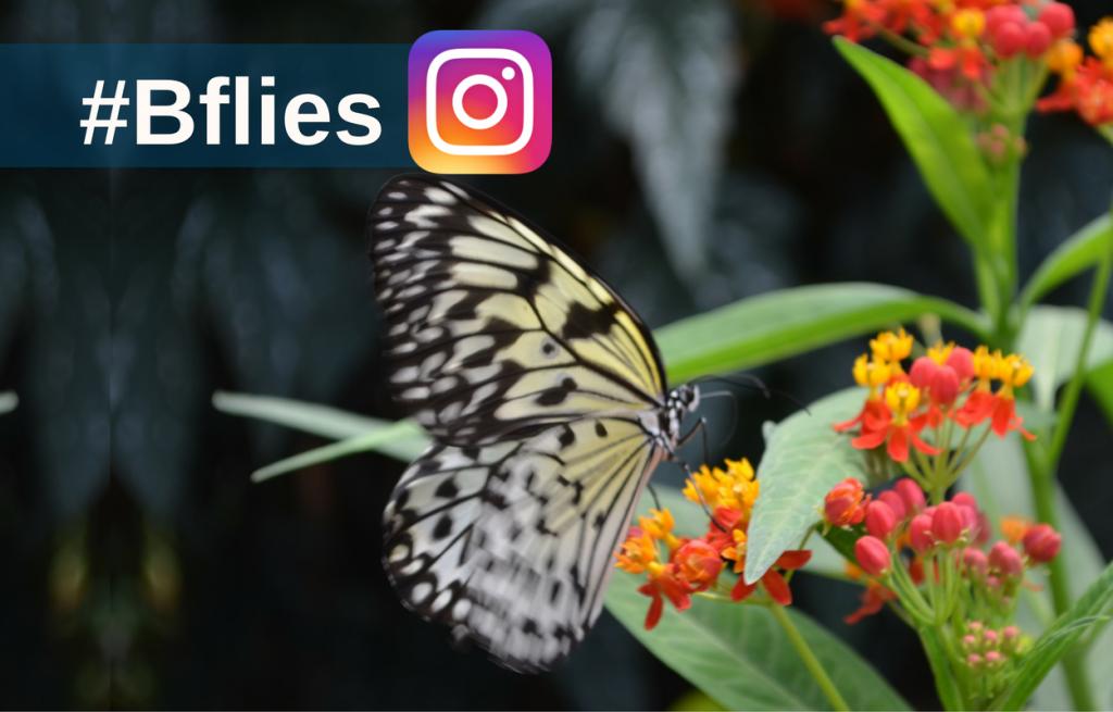 butterflieslive-instagram-5