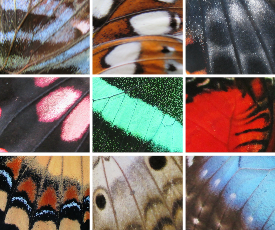 Up-close images of butterfly scales and tubular veins.
