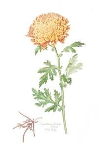 Advanced Watercolor for Botanical Illustration