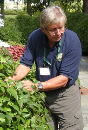Fall Pruning for Shrubs