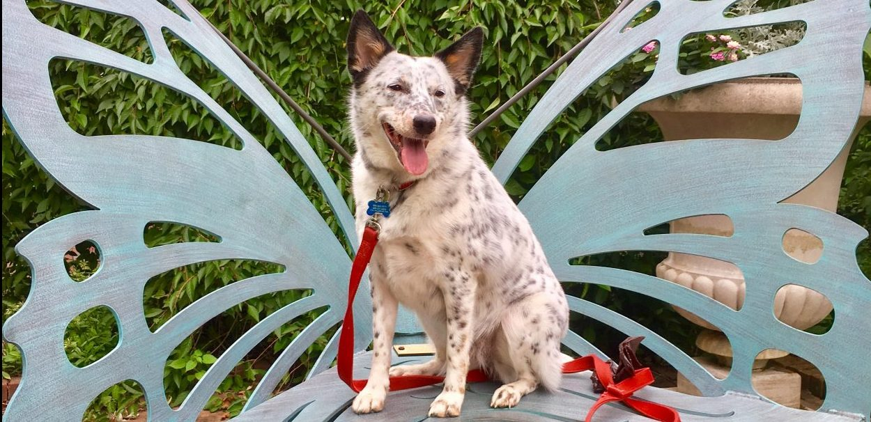 Dogs, like Jozy enjoy Lewis Ginter Botanical Garden with their owners. Her she is on one of our Butterfly chair