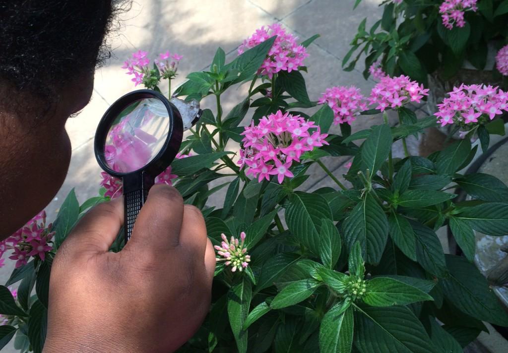 girl looking at butterflies