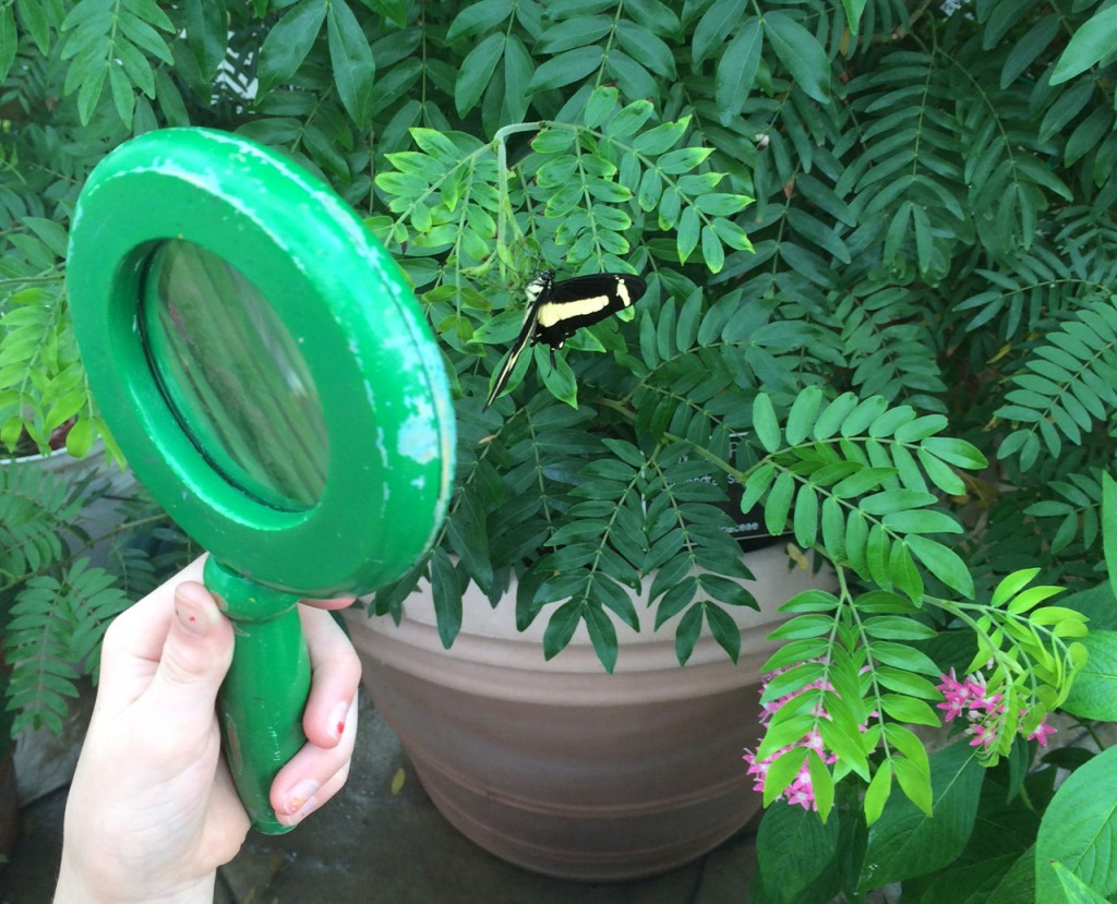Looking at the butterflies through a magnifying glass gives you a better view.