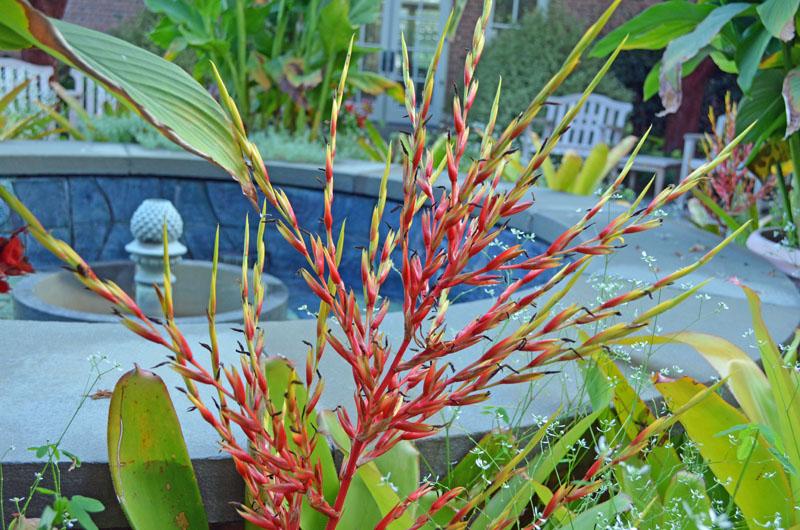 Bromeliad at Lewis GInter Botanical Garden