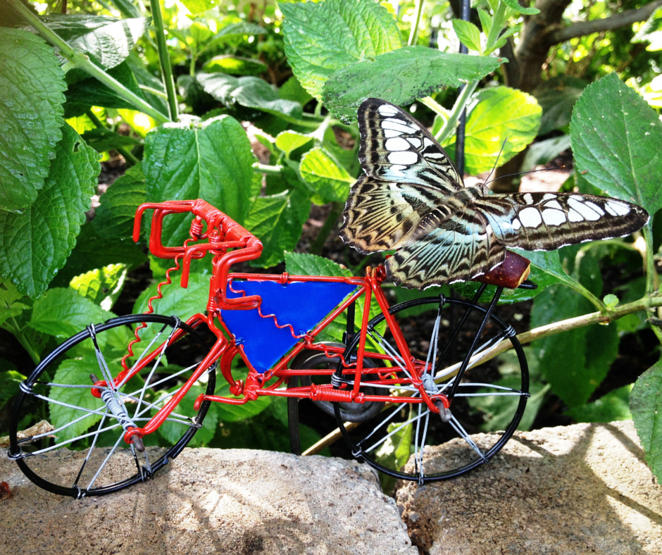 Blue clipper (Parthenos sylvia lilacinus) on red and blue bike