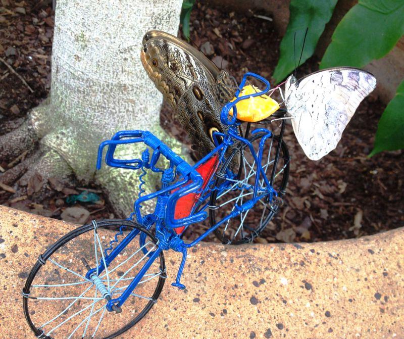 Giant owl (Caligo memnon) and king shoemaker (archaeoprepona demophon) sharing a blue bike