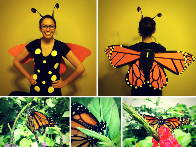Two images of female modeling Monarch (Danaus plexippus) costume with three real images of monarch butterfleis below.