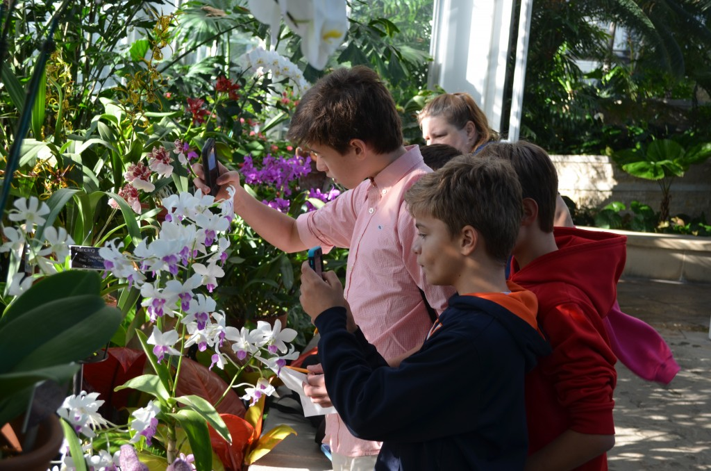 boys engaged with orchids