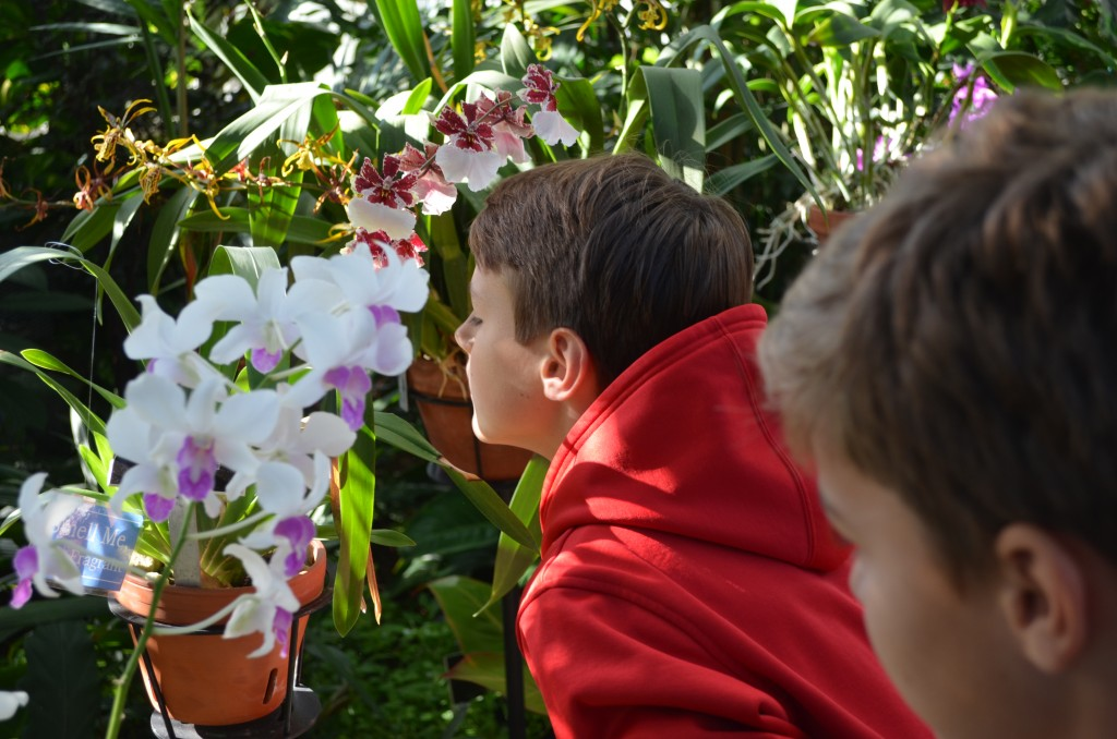 tweet smelling orchid