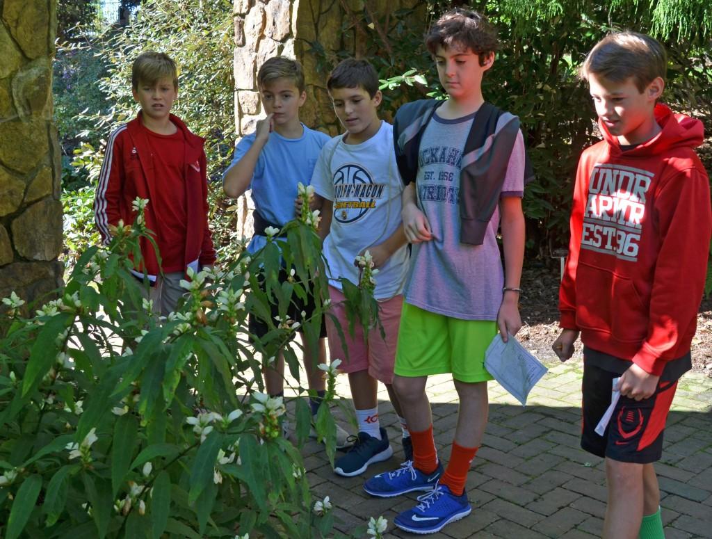turtle plant; Chelone lyonii