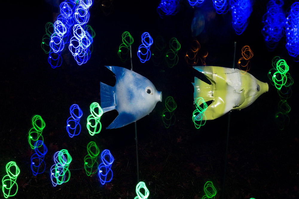 Light painting photo of bottle fish by class participant Kristen Grainer.