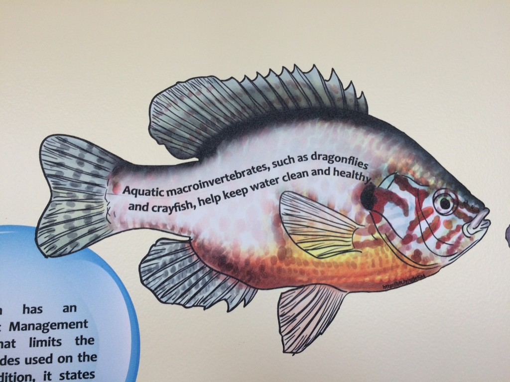 Fish fact decals on display in the Kelly Education Center