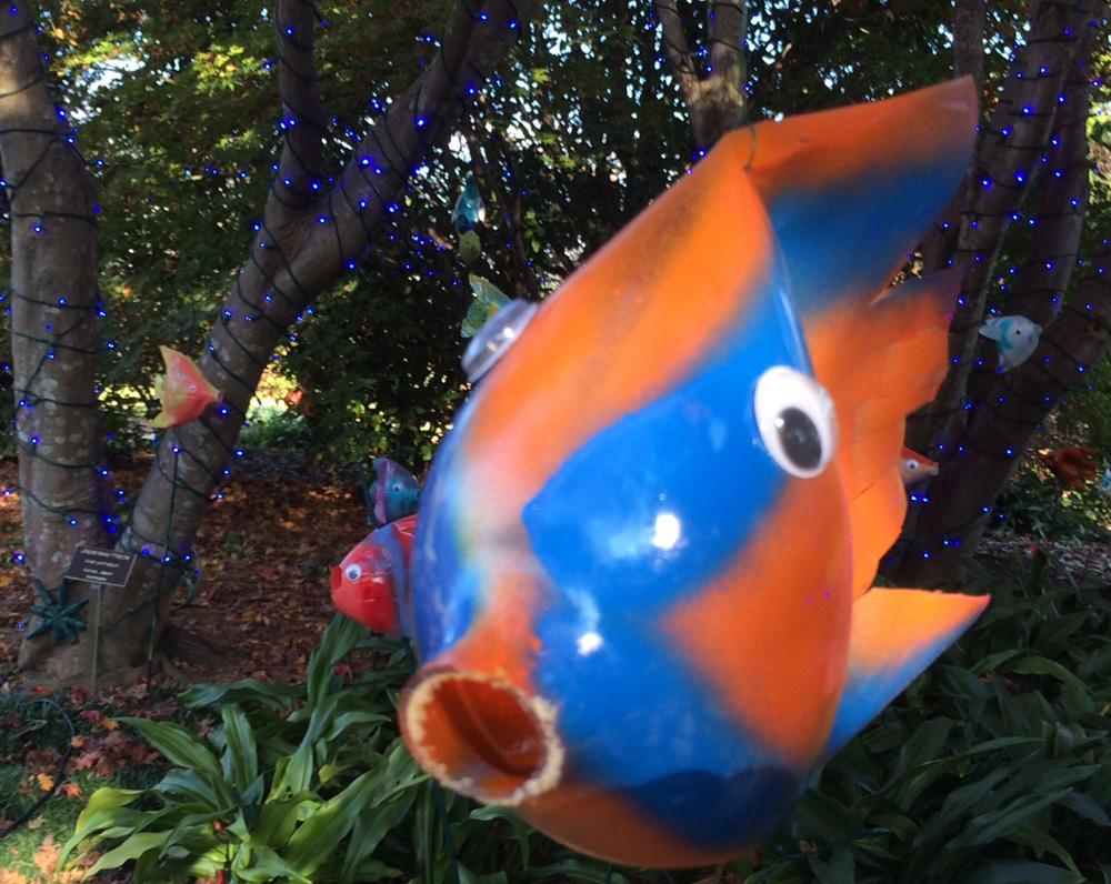 orange bottle fish