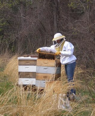 Charming Beekeeping For Beginners