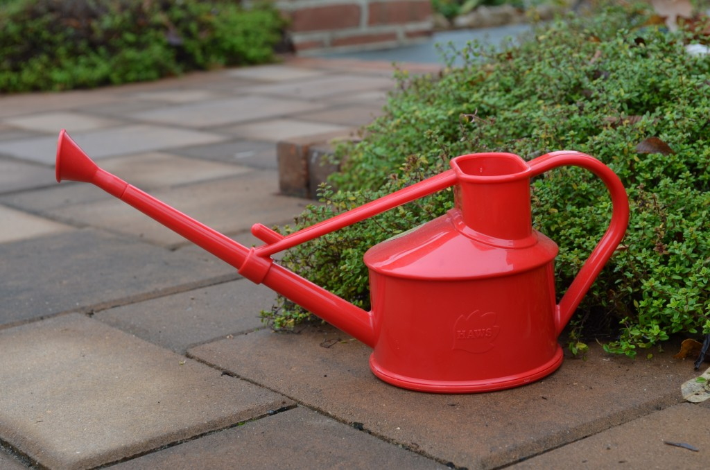 red Haws watering can
