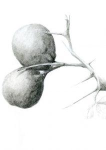 Botany for Botanical Artists