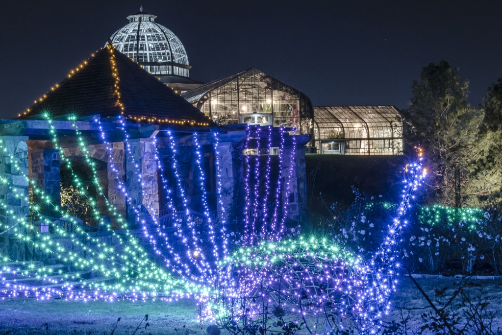 Peacock at Dominion GardenFest of Lights, photo by Don Williamson