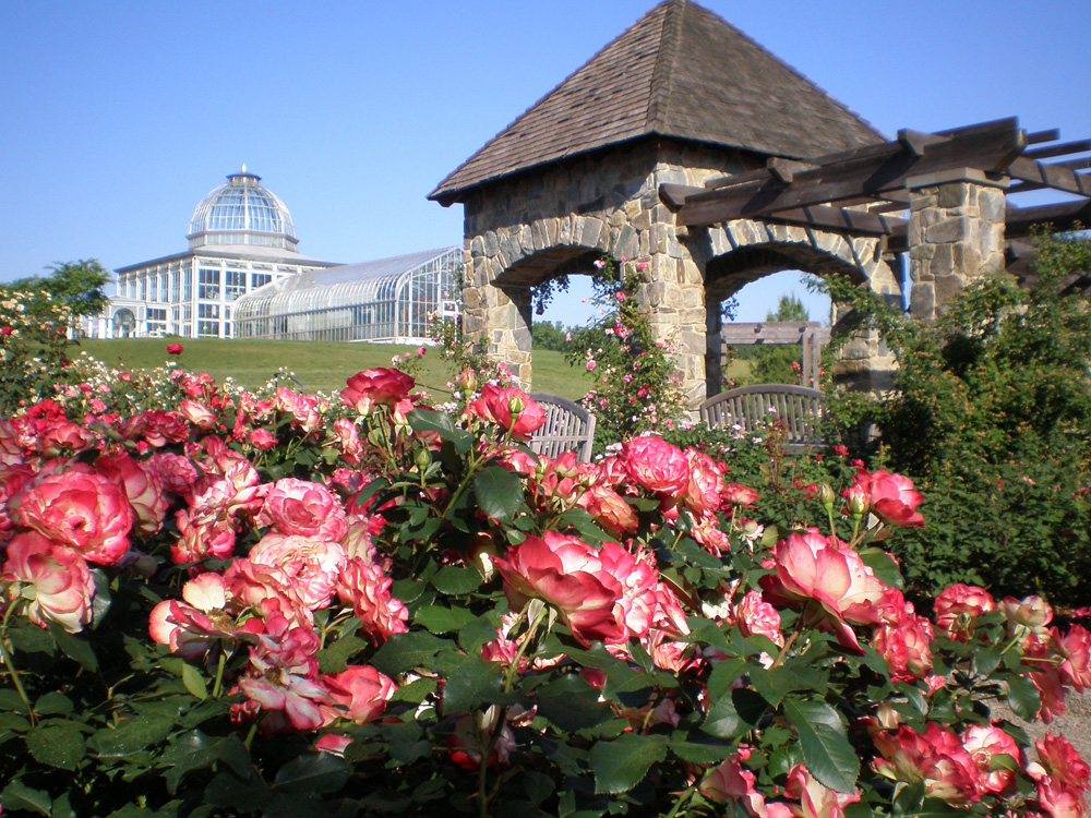 A lover of roses lewis ginter botanical garden Lewis ginter botanical gardens