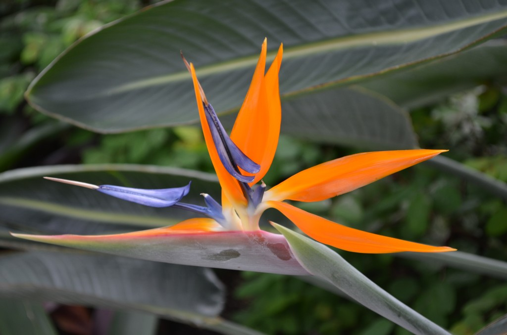 A bird of paradise is just one of the blooms you might see during our half-price admission days!