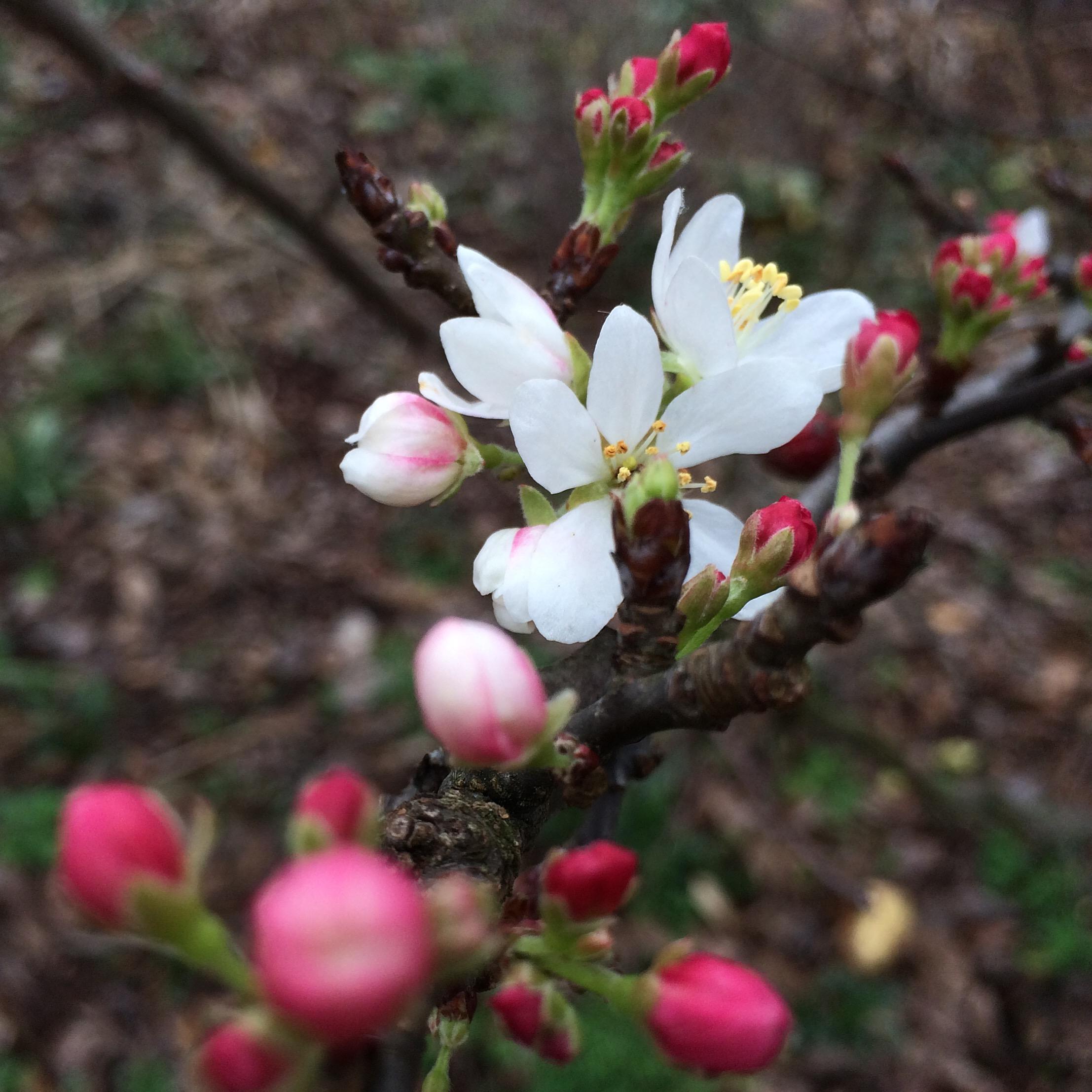 Los árboles florecientes de finales de verano son bienvenidos Additions to Landscape | Noticias de IANR