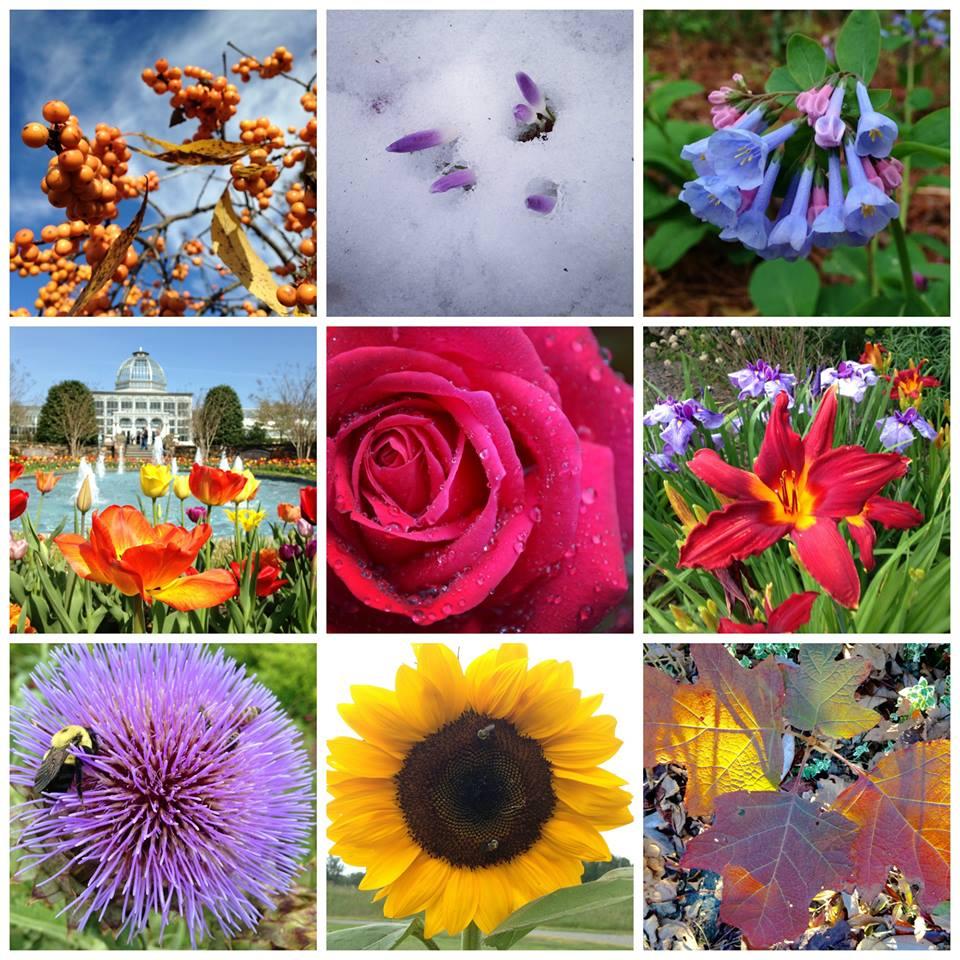 flowers beth monroe