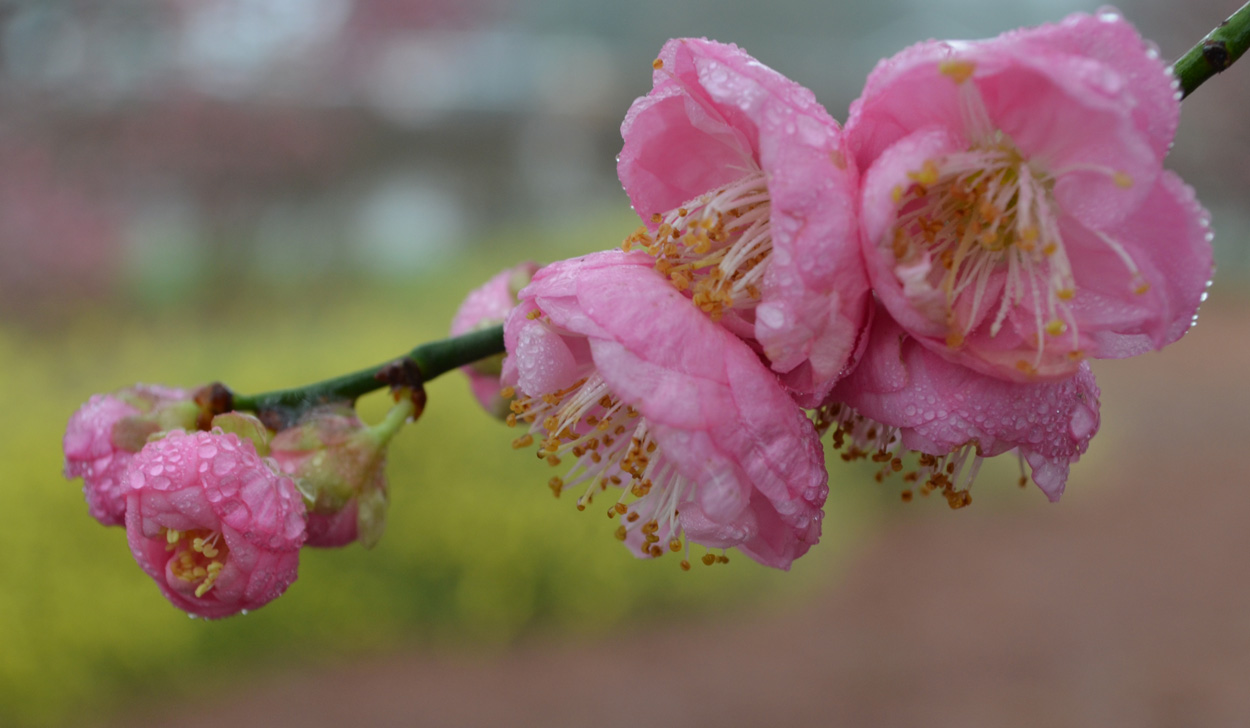 ¡Un árbol floreciente en primavera!