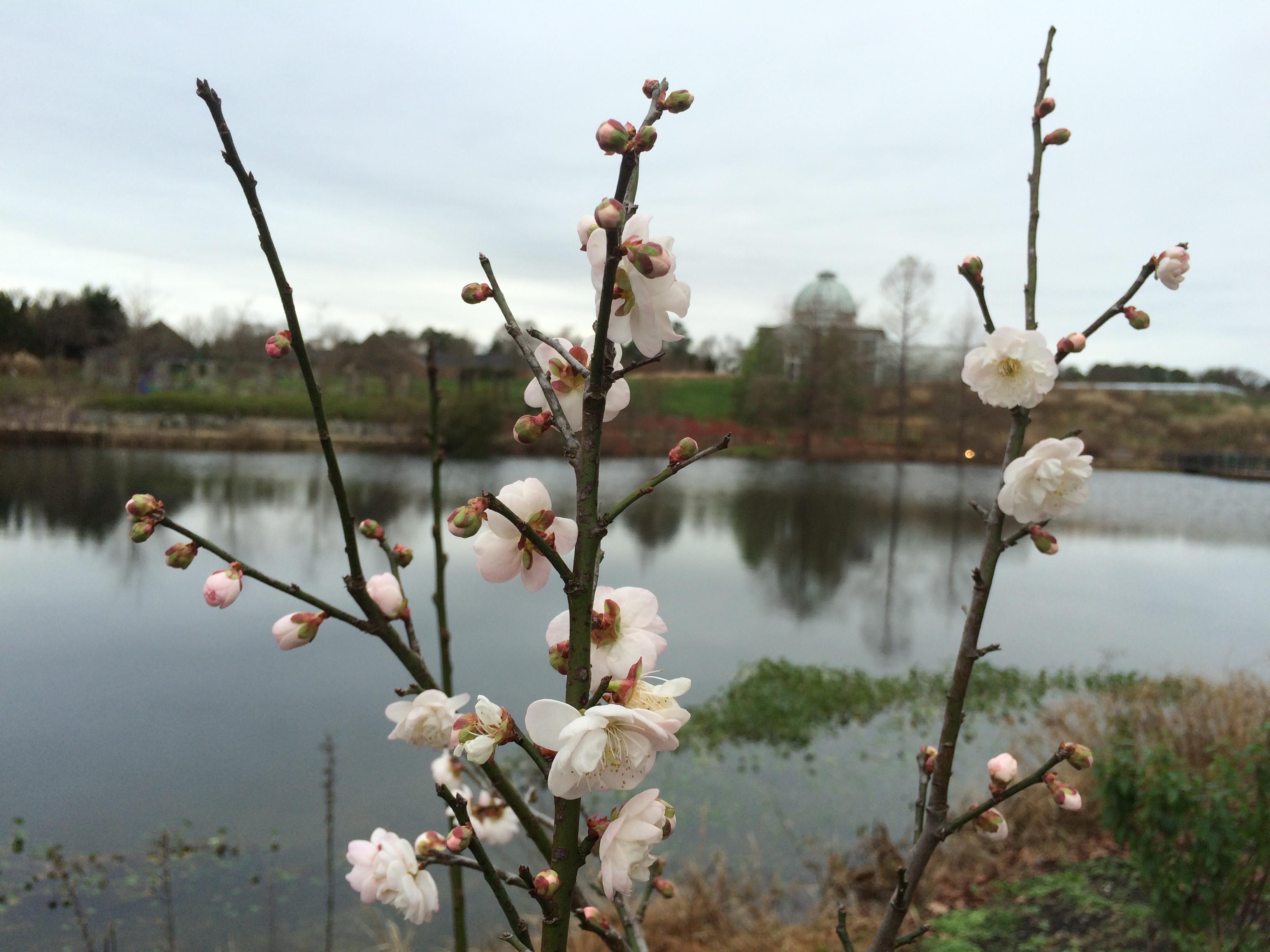 ¿Los árboles florecen en diciembre? - Jardín Botánico de Lewis Ginter