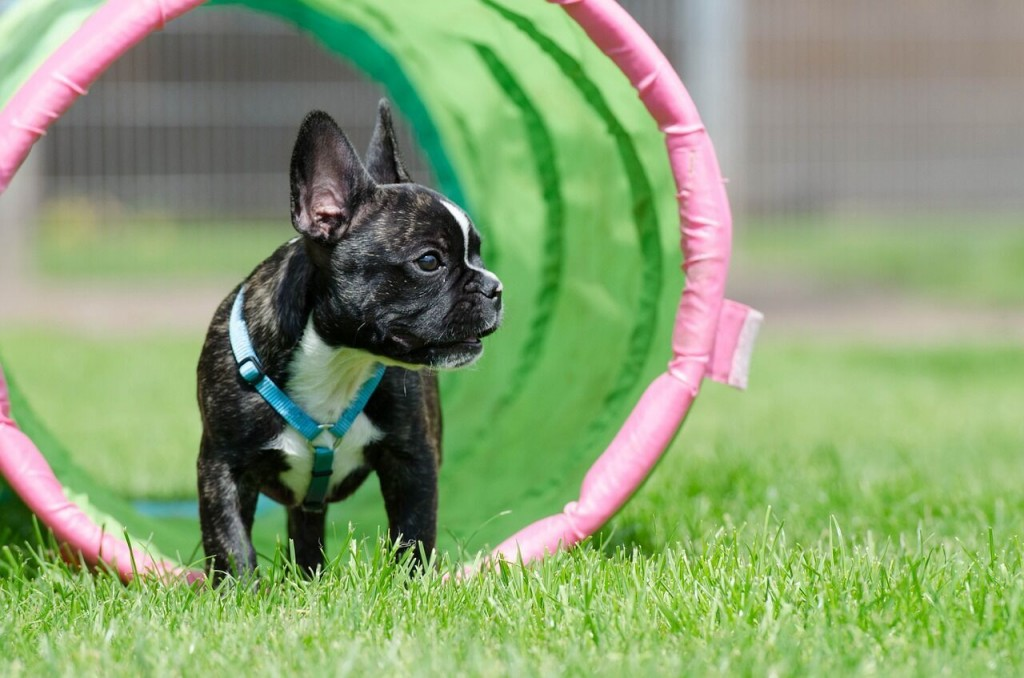 A pet trend is dog parks customized for exercise, play and overall wellbeing.