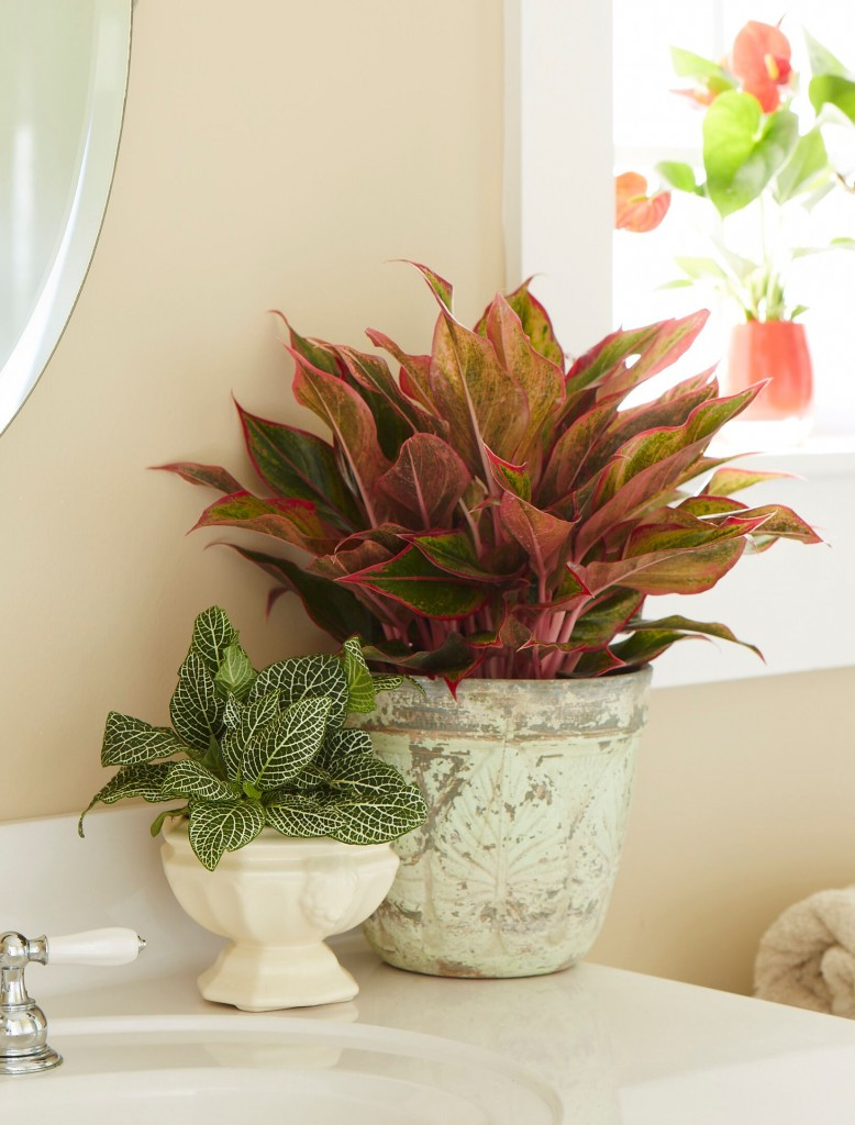 Container plants are being used indoors to support welltality.