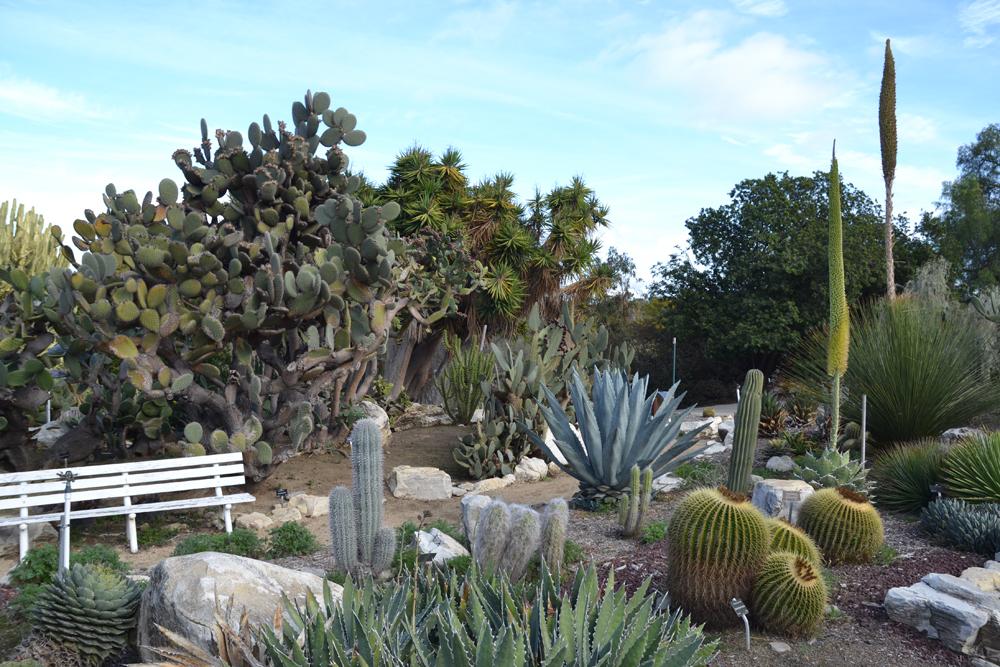Cacti display at South Coast Botanic Garden