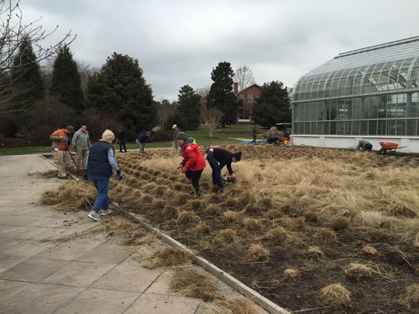 People outside of the Conservatory cutting back grass in the Ornamental Grass Garden.