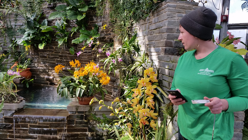 Chelsea Mahaffey, Conservatory Horticulturist, Updates The Orchid Inventory  At Lewis Ginter Botanical Garden So