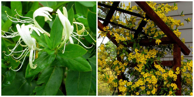 Plant This Not That Lewis Ginter Botanical Garden