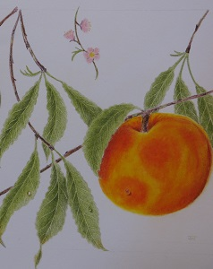 Colored Pencil Class at Lewis Ginter