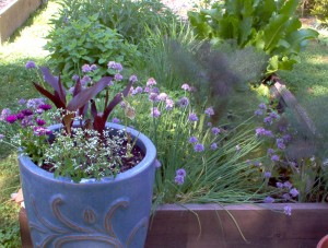 A container is used for growing chives and fennel.