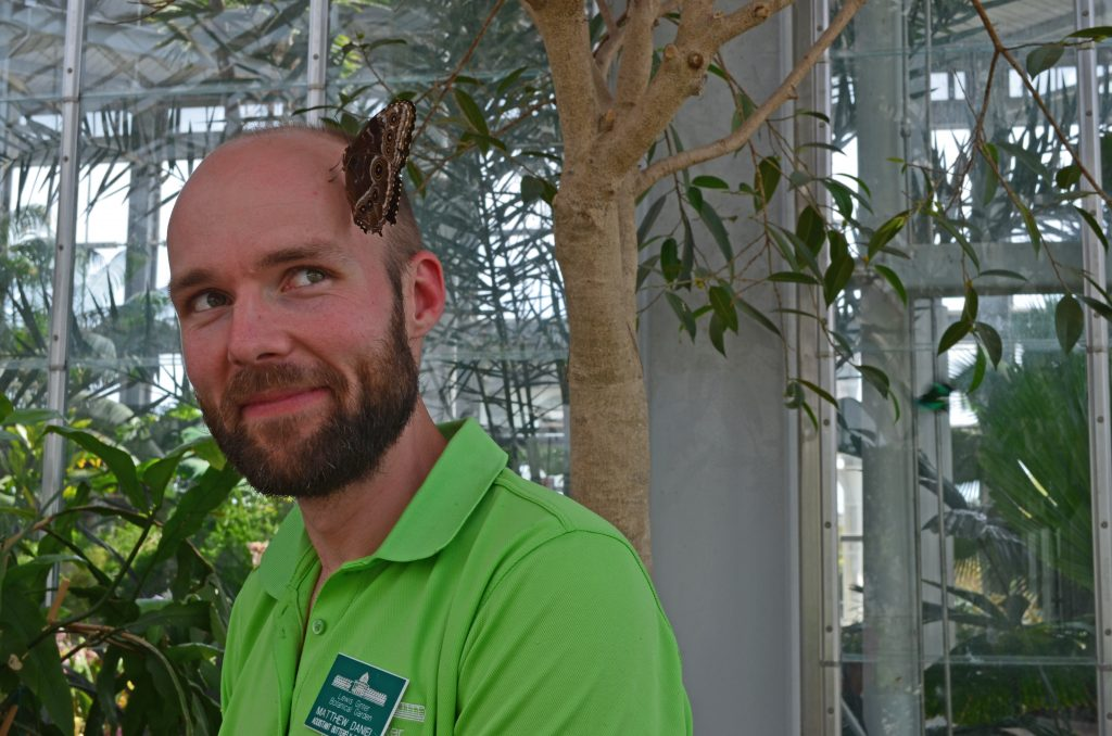 Assistant Butterfly curator Matthew Daniel poses for a picture with a butterfly on his head.