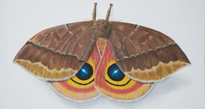 Painting of a moth with fuzzy head and antennae, brown top wings, and orange underwings with blue and yellow eye spots,