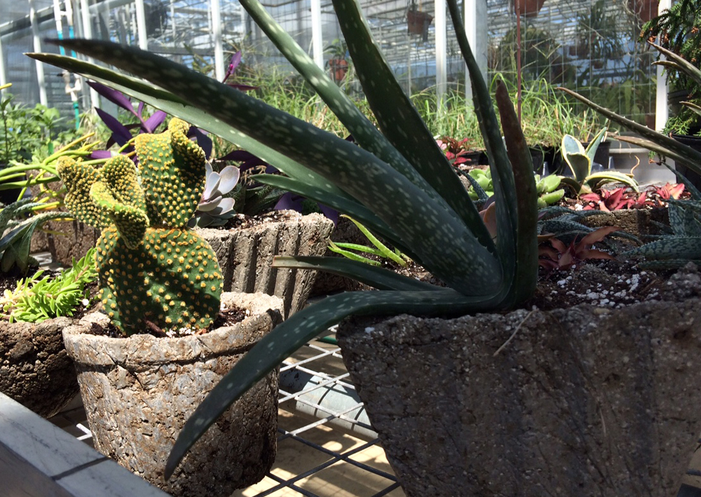 PlantFest hypertofa 1000