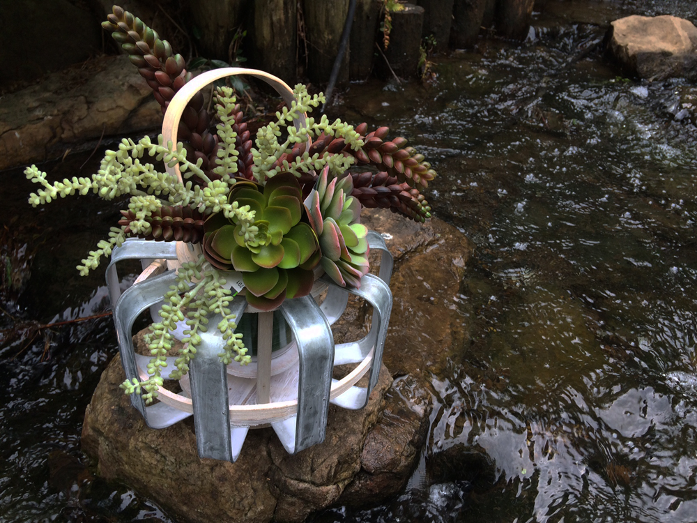 Garden Shop Wedding Ideas lantern with succulents 1000 best