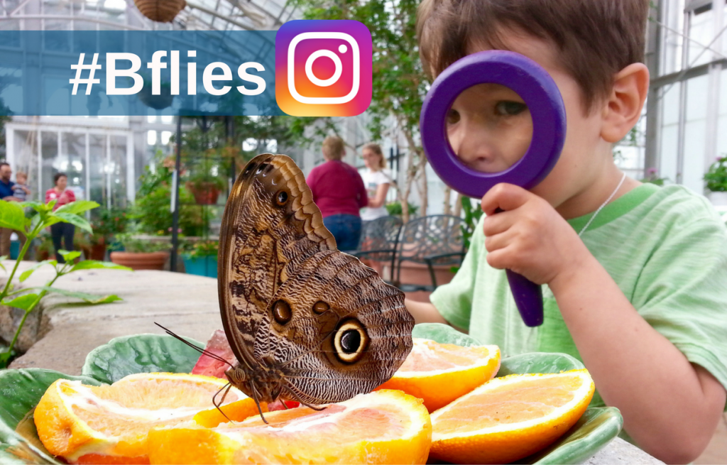 Butterflies LIVE Instagram contest graphic