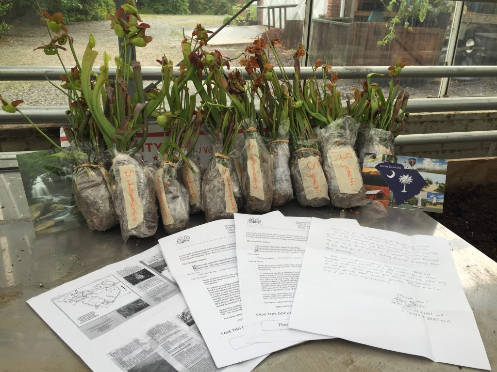 Adam Sforza researcher North America Sarracenia Conservancy donated to Garden 40 rare Sarracenia plants