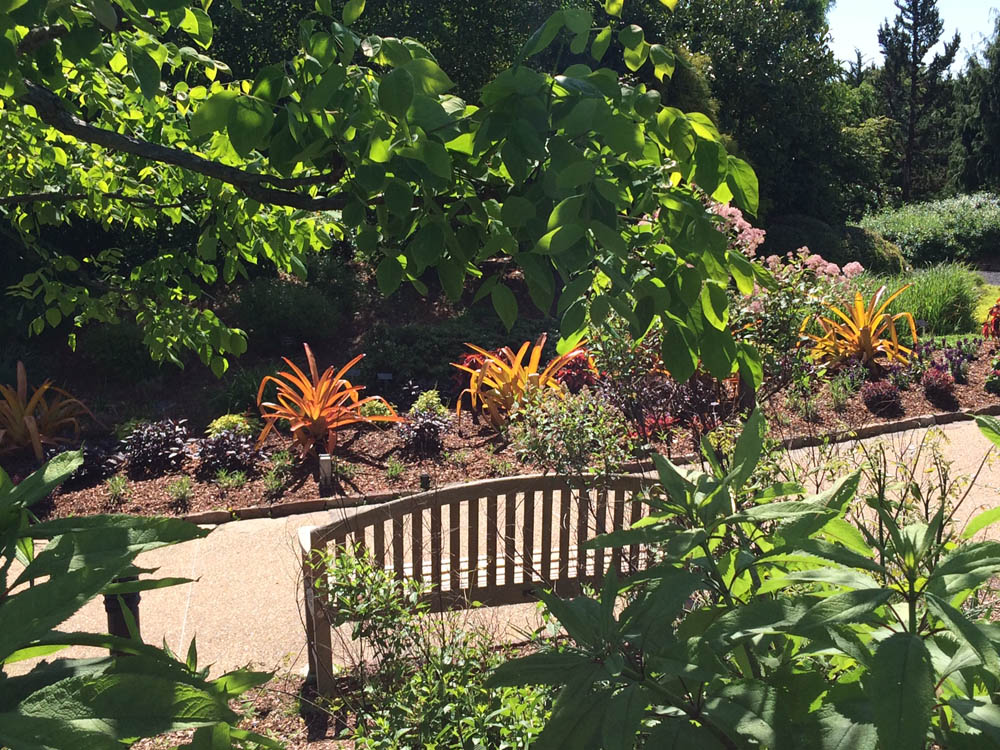A Bed is Born - Lewis Ginter Botanical Garden